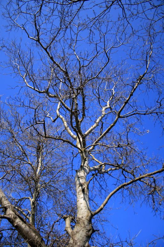 Программа для построения генеалогических деревьев Древо Жизни.
